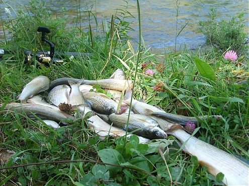 верховая рыбалка на хариус