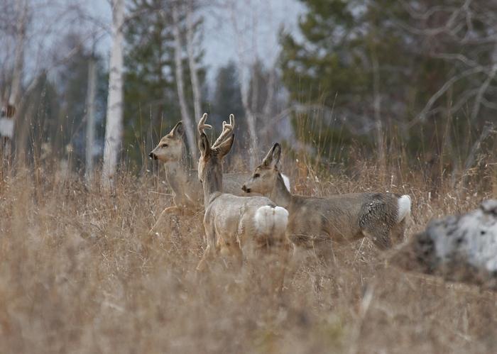 Охота на косулю в ноябре