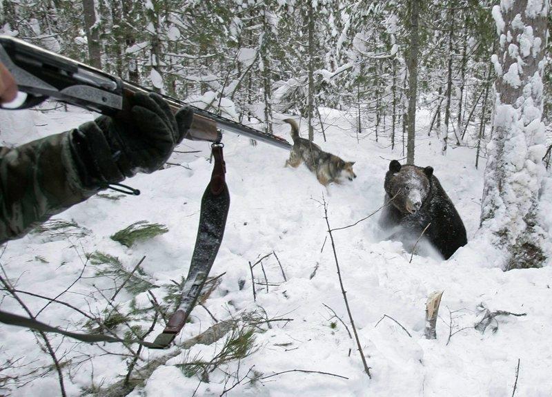 Проблема, В каких районах башкирии разрешена охота без лицензии 2017 году это
